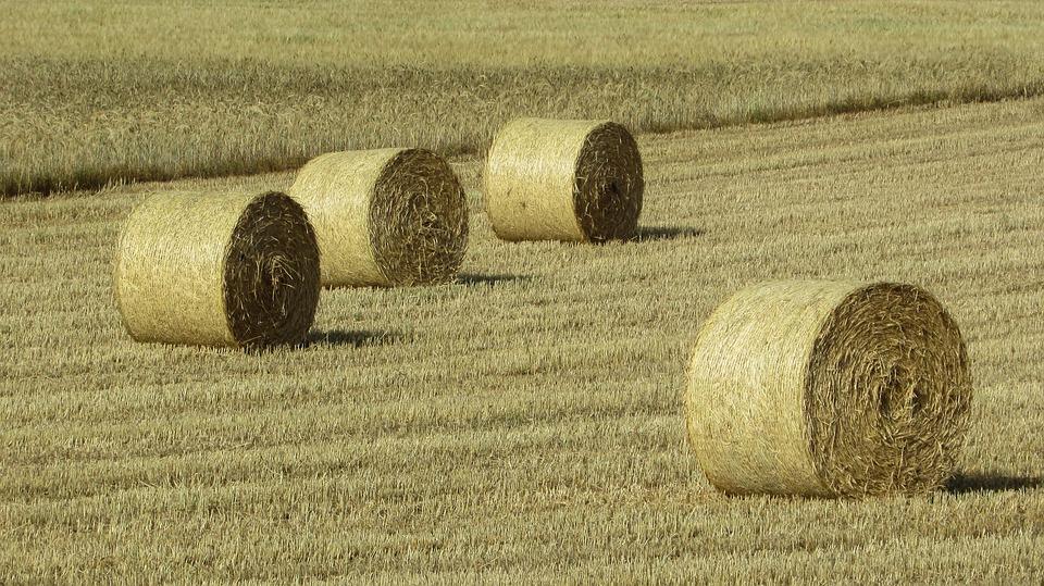 Pénurie de fourrage : les agriculteurs s'entraident